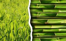 Accumulazione verde della priorità bassa della natura Fotografia Stock