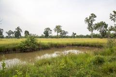 Accumulez près de la rizière, avec des beaucoup arbre Photographie stock