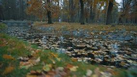 Accumuli nel parco di autunno, coperto di foglie cadute stock footage