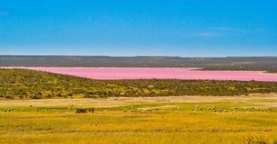 Accumuli nel rosa sull'interno di Patagonia Fotografia Stock