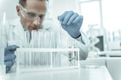 Accurate scientist using clear dropper while transferring liquids. Scientist being confused. Accurate scientist using clear dropper while transferring liquids royalty free stock photography