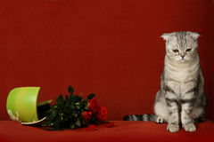 Accused cat and broken pot of flowers Stock Photo