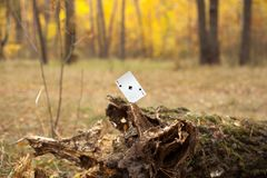 Ace of Spades card in the forest royalty free stock images