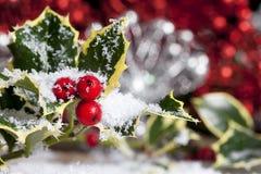 Acebo de la Navidad con nieve fotos de archivo libres de regalías
