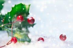 Acebo de la Navidad en nieve foto de archivo