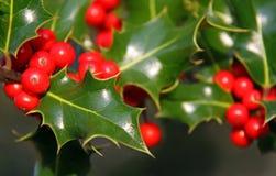 Acebo de la Navidad y bayas rojas Imagen de archivo