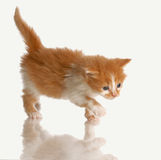 Acecho del gatito Fotos de archivo