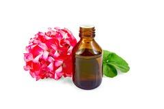 Aceite con los geranios rosados en botella oscura Imagen de archivo libre de regalías