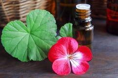 Aceite de geranio esencial Foto de archivo libre de regalías