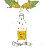 Aceite de maíz en botella Descensos del aceite de maíz Ejemplo dibujado mano del vector aislado en blanco Imagen de archivo libre de regalías