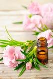 Aceite esencial del absoluto del clavel y flores rosadas en la tabla de madera imagen de archivo libre de regalías