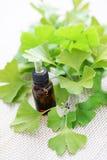 Aceite esencial del biloba del Ginkgo Foto de archivo