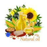 Aceite natural de las plantas del origen y del cartel nuts del vector stock de ilustración