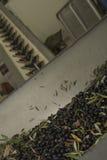 Aceite y aceitunas Cilento Campania Aquara (él) Oliv virginal adicional Foto de archivo libre de regalías