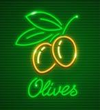 Aceitunas maduras en rama con las hojas verdes Imagen de archivo