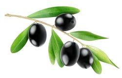 Aceitunas negras Imagen de archivo libre de regalías