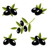 Aceitunas negras con las hojas Fotografía de archivo libre de regalías