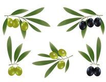 Aceitunas negras del anuncio verde con las hojas. Imagenes de archivo