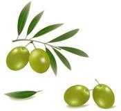 Aceitunas verdes con las hojas. Fotografía de archivo libre de regalías