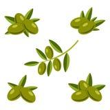 Aceitunas verdes con las hojas Imagenes de archivo