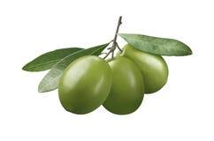 Aceitunas verdes con las hojas aisladas en el fondo blanco Foto de archivo libre de regalías