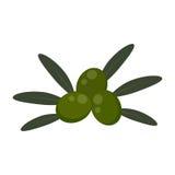 Aceitunas verdes del icono plano Imagen de archivo