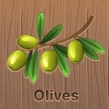 Aceitunas verdes en una ramificación Fotografía de archivo libre de regalías