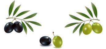 Aceitunas verdes y negras con las hojas. Imagenes de archivo