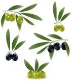 Aceitunas verdes y negras con las hojas. Imagen de archivo libre de regalías