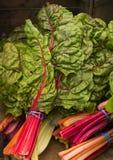 Acelga suíça do arco-íris Imagens de Stock Royalty Free