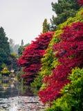 Acer-Baum-Blätter, die Farbe ändern Stockbilder