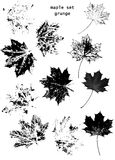Acer platanoides leaves Royalty Free Stock Images