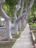 Acera alineada árbol Imágenes de archivo libres de regalías
