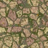 Acera cubierta de musgo Imágenes de archivo libres de regalías