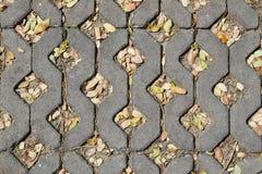 Acera del ladrillo con las hojas Fotografía de archivo