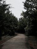 Acera en un bosque del desierto foto de archivo libre de regalías