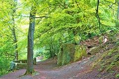 Acercándose a la ermita, en el bosque de Sneaton, York del norte amarra, Inglaterra fotos de archivo