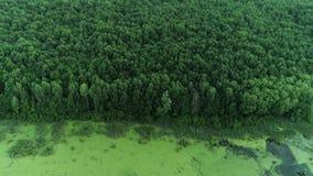 Acercamento do parque da conservação da opinião aérea da floresta do pântano filme
