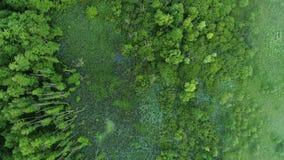 Acercamento do parque da conservação da opinião aérea da floresta do pântano vídeos de arquivo