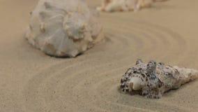 Acercamiento de las conchas marinas que se colocan en un zigzag de la arena Tiro del carro almacen de metraje de vídeo