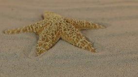 Acercamiento de una estrella amarilla que miente en las dunas de arena almacen de video