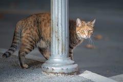 Acercamiento del gato nacional Fotos de archivo libres de regalías