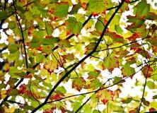 Acero capovolto rosso Fotografia Stock
