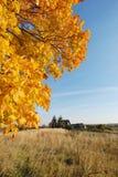 acero del finery di autunno vecchio Fotografia Stock Libera da Diritti