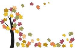 Acero dell'albero di autunno Immagine Stock
