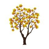 Acero di autunno illustrazione di stock