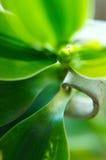 Acero en la naturaleza Fotografía de archivo