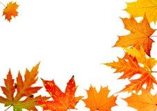 Acero-foglio di autunno illustrazione di stock