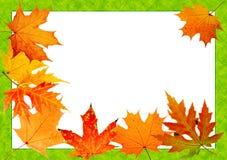 Acero-foglio di autunno royalty illustrazione gratis