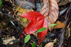 Acero rosso Immagini Stock